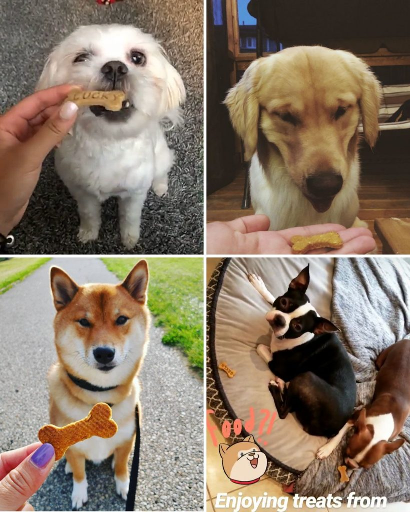 dogs and puppies eating cookies